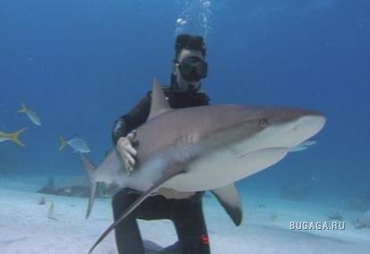 Акулы.....!!