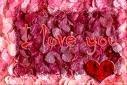 My Heart