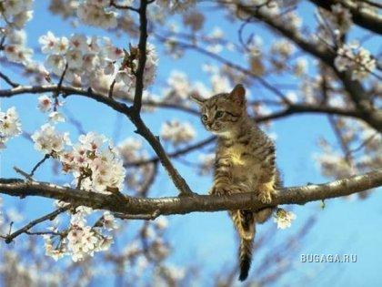 Весна пришла! :)