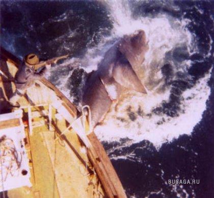 Серфер выжил после нападения акулы. просмотров: 4468 комментариев (49).