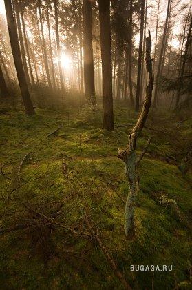 Великолепие природы