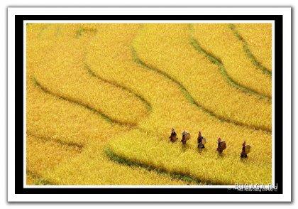 или мир в желтых тонах лучше?..