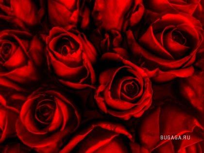 Вам нравится красный?
