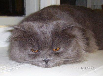 Кошки, 12 фото