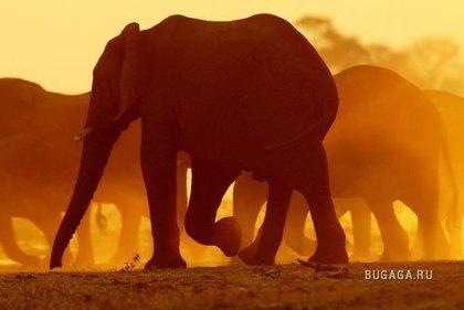Африканские закаты. часть 1. (13 фото)