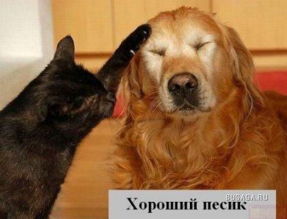 Кошачий юмор (21 фото)