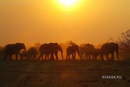 Африканские закаты. часть 2. (13 фото)