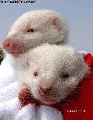 Альбиносы-кто они??