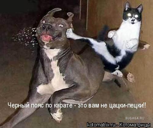 http://www.bugaga.ru/uploads/posts/2008-05/1209883940_11.jpg