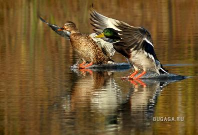 ПО двое рассчитайсь!)))