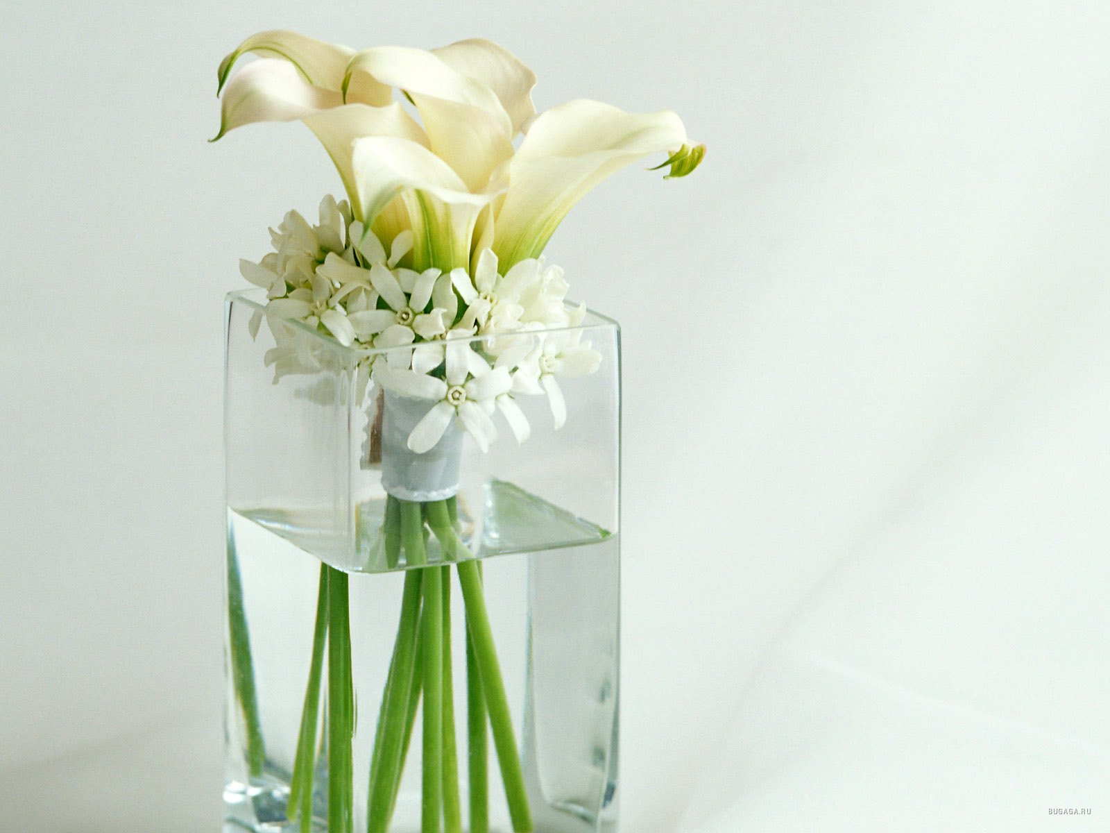 Цветы (75 фото) - Скарамуш.ру - сайт хорошего настроения!
