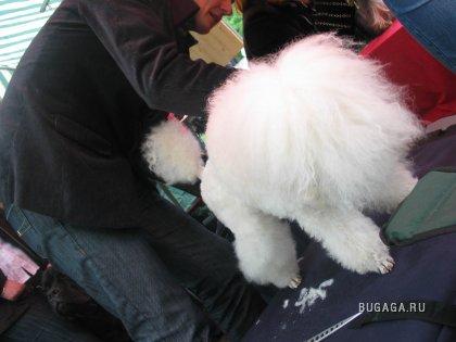 Выставка собак в Кишиневе.