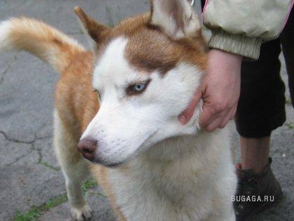 Выставка собак в Кишиневе. Часть 2