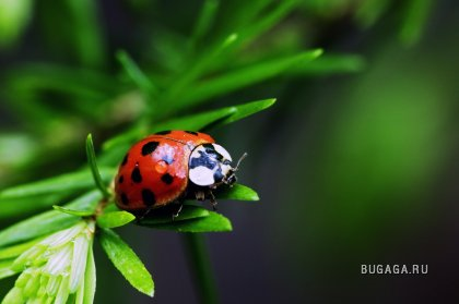 красивые насекомые в нашей жизни