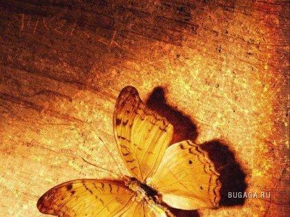 Скоро лето... Скоро бабочки...