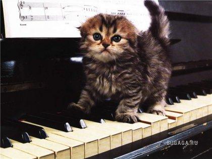 Музыкальное зверьё