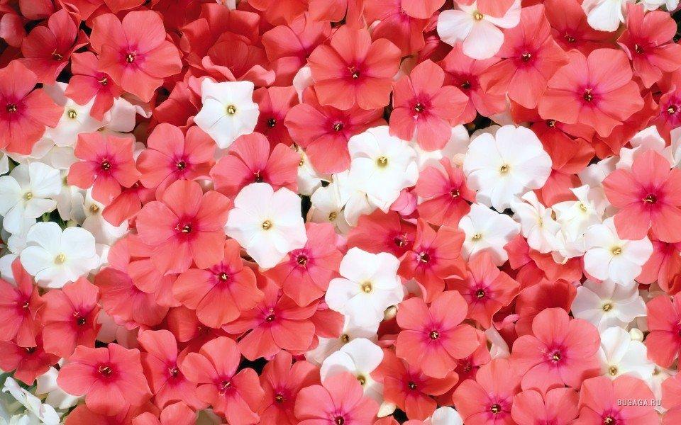 Маленькие цветочки маленькие
