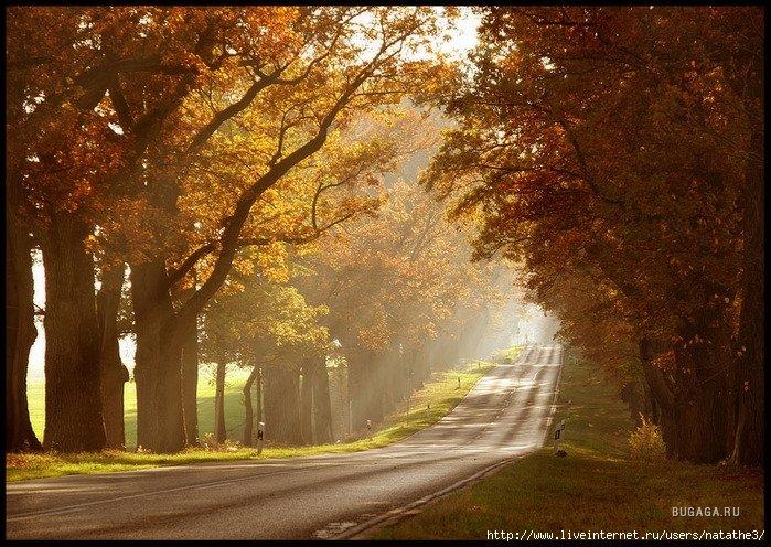 http://www.bugaga.ru/uploads/posts/2008-06/1213451353_26022837_1212067721_autumn_sun_by_ssilence1.jpg
