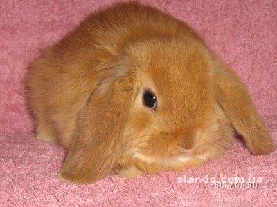 Мои любимые карликовые крольчата!!!