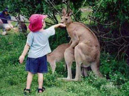 Животные инстинкты (11 фото)