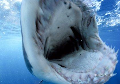 Подводно, загадачно, красиво от David Doubilet (part2)