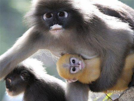 Милые обезьянки (5 фото) » Зооблог ру - ZOOblog Ru