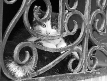 Красивые фото котиков