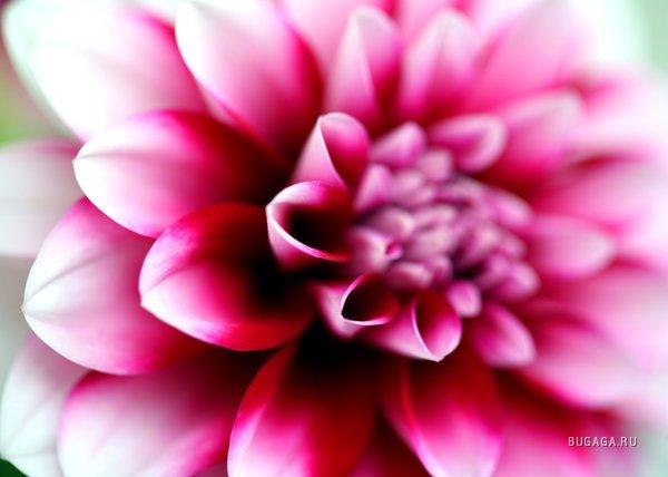 http://images.bugaga.ru/posts/2008-08/1219182569_17760_macromir-43.jpg