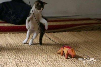 Бой аллегатора с тигром