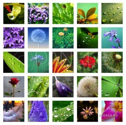 МАКРО: чудесный мир природы