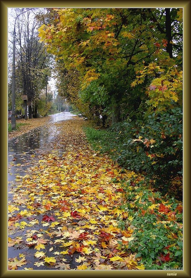 через картинки фото с добрым утром с дождливая осень этой