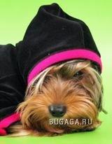 корманные собачки :)