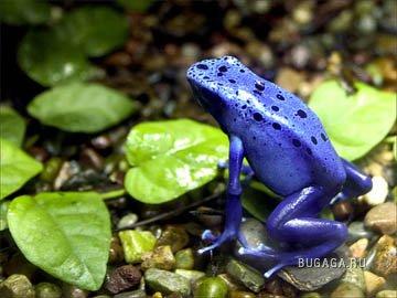 10 редких видов животных на грани вымирания