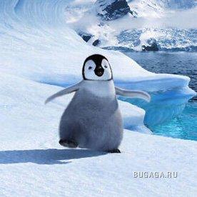 Симпатяшки пингвины!!!