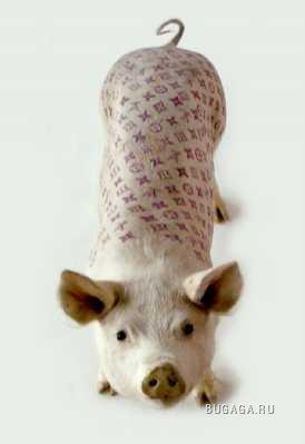 Татуированные свинюшки...