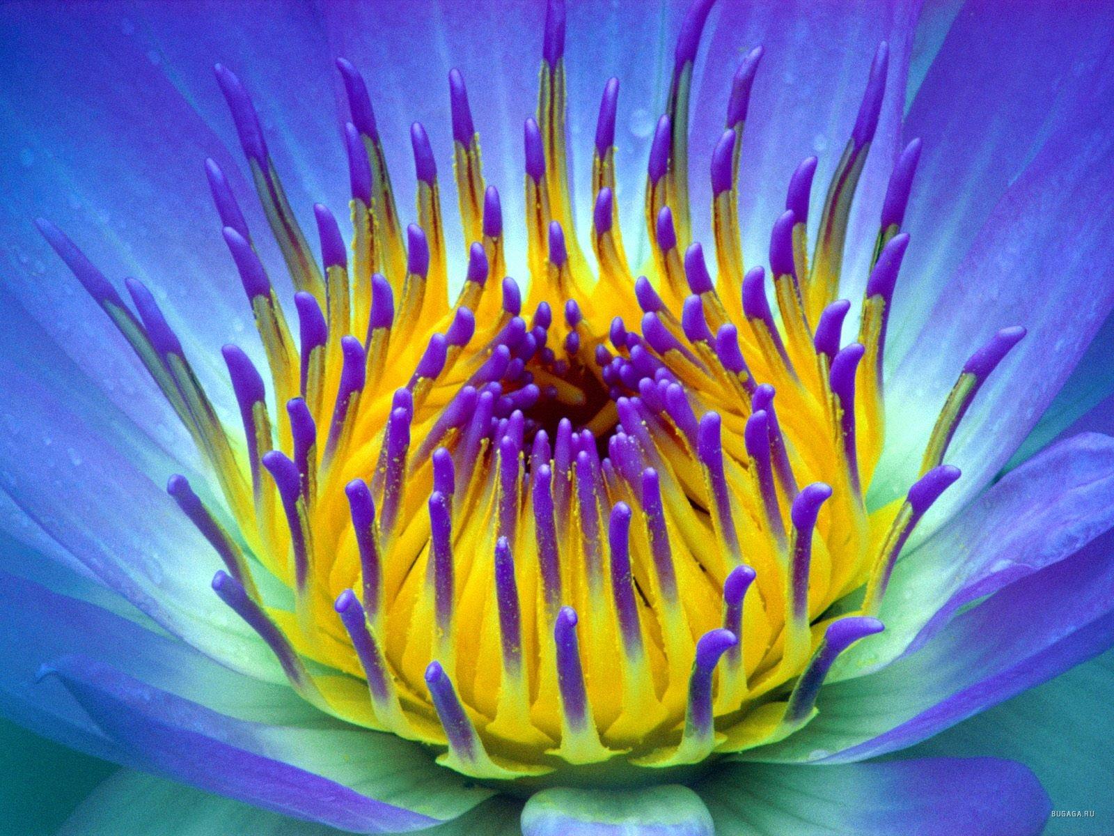 Тему красивые яркие и нежные цветы