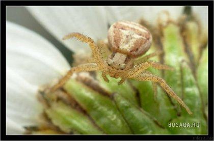 Для любителей пауков ;)