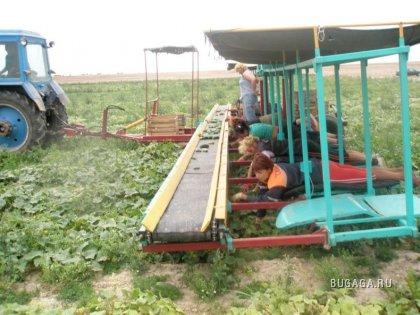 Сбор урожая :-)