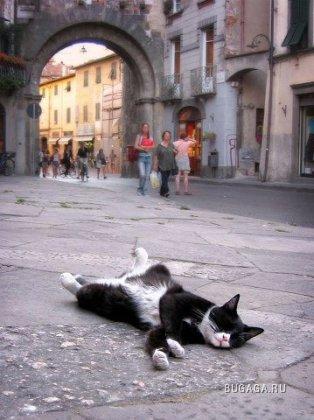 Где упал, там и уснул ;)