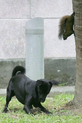 Собака хотела загрысть бельчонка