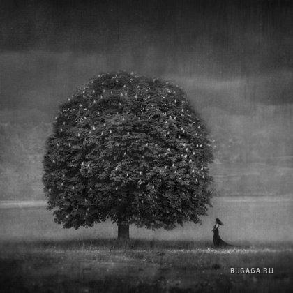 Работы фотографа Dariusz Klimczak....