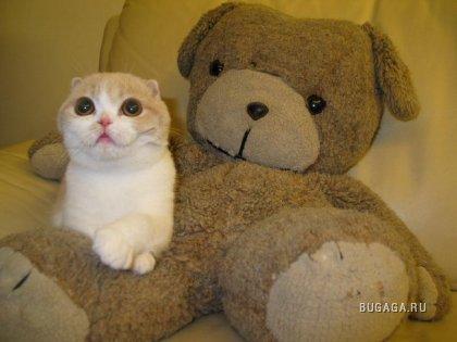 ЛюбителЯм котиков!!!!