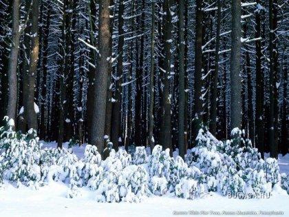 Фантастические зимние пейзажи!!!