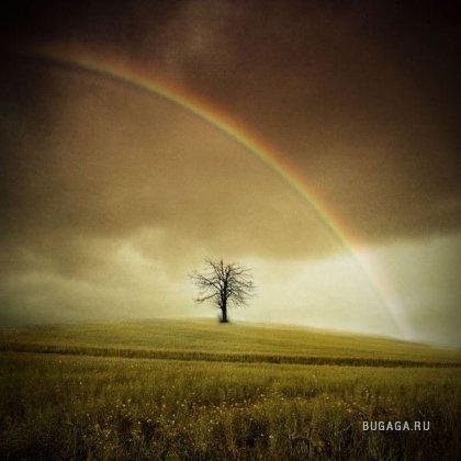 Одинокие деревья...