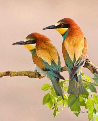 Птички...