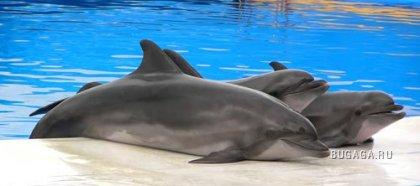 Дельфинчики..