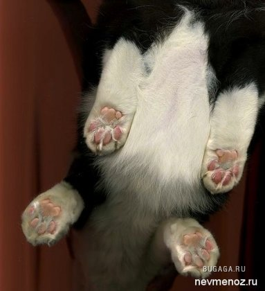 Отсканированные кошки (14 фото)