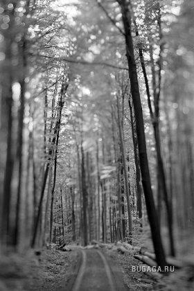 природа в ч/б тонах от Kaspar Hauser