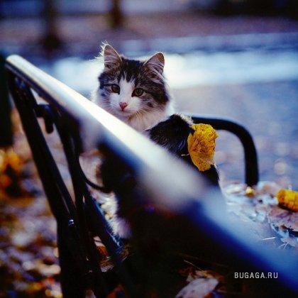 Мяу! Или снова кошки :-)