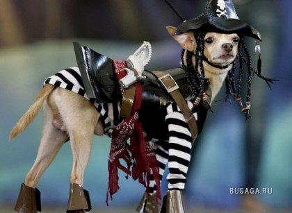 Парад собачьих нарядов